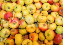 Apples夫人 免版税库存图片