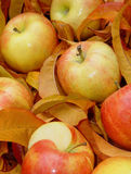Apples. Autumn apples stock photography
