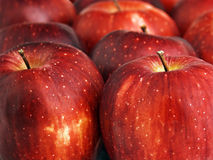 Apples. A display of Red Delicious apples royalty free stock image