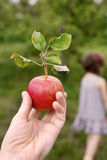 Apples 11 Royalty Free Stock Images