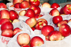 Apples. On display at a farmers market in Minnesota Royalty Free Stock Images