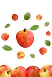 Apples. Composition of a apples on a white background royalty free stock photos