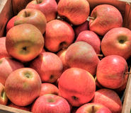 Apples. A high dynamic range image of a crate of apples after picking Stock Photos