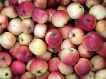 Apples. Background of red fresh apples Stock Images