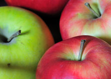 Free Apples Stock Photography - 12295072
