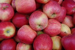 Apples. A collection of apples on the market Stock Photos