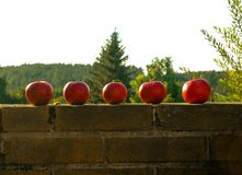 5 apples stock photography