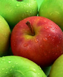 Apples. A red apple among green apples with drops of water royalty free stock photo