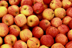 Apples. In red mixed with yellow color Royalty Free Stock Photos