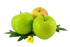 Apples. Three apples on white background stock photography