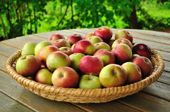 Apples. In a wicker basket - on the table Stock Image