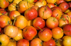 Apples 15 Royalty Free Stock Image