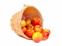 Apples. Spilling out of a wooden farmer's basket, isolated on white Stock Photography