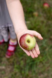 Apples 2 Royalty Free Stock Image