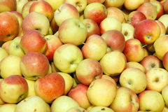 Apples. The background of many apples Royalty Free Stock Image