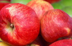 Free Apples Stock Images - 21539344