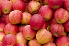 Apples. A group of red and fresh Apples Stock Images