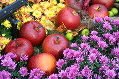 Apples. Set in a flower garden Royalty Free Stock Photography
