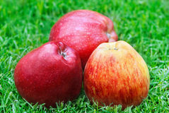 Apples. Close up of colorful apples on the grass Stock Photos