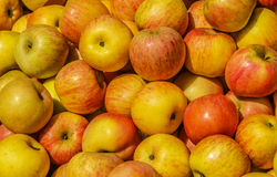 Apples. Autumn harvest of apples full frame Royalty Free Stock Photo