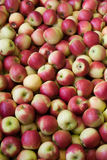 Apples. Bunch of apples during storing time Royalty Free Stock Photography