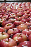 Apples. Bunch of apples during cleaning and selection process Stock Images