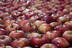 Apples. Bunch of apples during cleaning and selection process Stock Photo