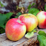 Apples. Fresh apples on the wooden bench Stock Images