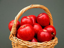 Apples. Fresh, juicy apples full of vitamins just picked from the tree Stock Photography