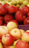 Apples. Background with delicious yellow, red and green apples Stock Photography