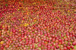 Apples. Fresh and red apples everywhere Royalty Free Stock Images