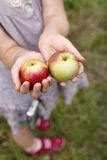 Apples 3 Royalty Free Stock Image