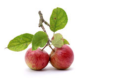 Apples. Two fresh red apples with leaves on a white background stock images