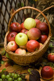 Apples. Basket full of colorful apples Stock Photo