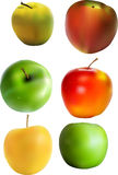 Apples. Different apples painted in Illustrator Royalty Free Stock Photos