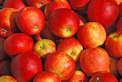 Apples. Sale of red, ripe apples on a market Stock Photography