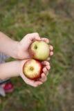 Apples 4 Stock Image