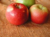 Apples. On a burlap bag stock photography