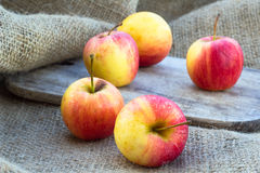 Free Apples Stock Photography - 55254292