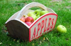 Free Apples Stock Photography - 5867692
