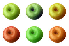 Apples (6 different colour) Stock Photos