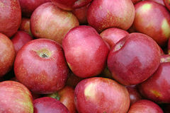 Apples. A large group of beautiful red apples royalty free stock photo