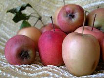 Apples. Composition of wild, little apples Royalty Free Stock Images