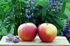Apples against flowers Royalty Free Stock Photo