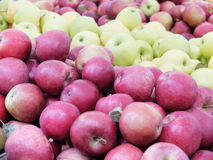 Apples of all colors Stock Photos