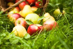 Free Apples And Pears On The Grass Royalty Free Stock Photos - 36696688