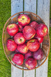 Apples aplenty Royalty Free Stock Images
