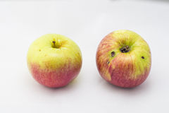 Apples. Apple eaten by a worm stock photography