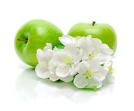 Apples and apple flowers on a white background Royalty Free Stock Image