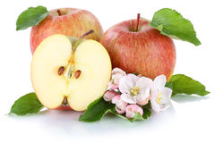 Apples apple fruit fresh fruits  on white Royalty Free Stock Images